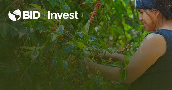 BID Invest apoya a Mercon para fortalecer el sector cafetalero en Latinoamérica, promoviendo la sostenibilidad e inclusión