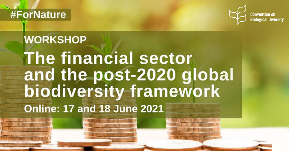 The financial sector and the post 2020 Global Biodiversity Framework